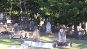Κωνοφόρα που αυξάνονται από τους κώνους πεύκων στα στεφάνια επάνω στους τάφους yesteryear φιλμ μικρού μήκους