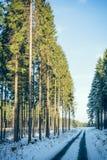 Κωνοφόρος δασικός δρόμος το χειμώνα IV Στοκ Φωτογραφίες