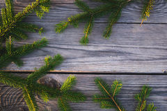 Κωνοφόρος κλάδος 5 Στοκ Φωτογραφίες