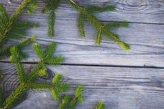 Κωνοφόρος κλάδος 4 Στοκ Φωτογραφία
