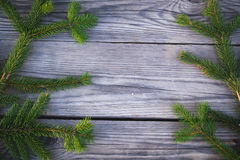 Κωνοφόρος κλάδος Στοκ Εικόνες