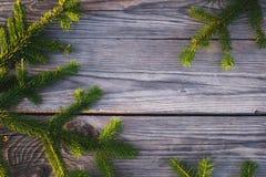 Κωνοφόρος κλάδος 6 Στοκ φωτογραφία με δικαίωμα ελεύθερης χρήσης