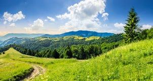 Κωνοφόρο δάσος σε μια κορυφή βουνών στην ανατολή στοκ φωτογραφίες με δικαίωμα ελεύθερης χρήσης