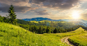 Κωνοφόρο δάσος σε μια κορυφή βουνών στο ηλιοβασίλεμα στοκ φωτογραφίες
