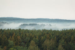 Κωνοφόρο δάσος στην ομίχλη Στοκ Φωτογραφία