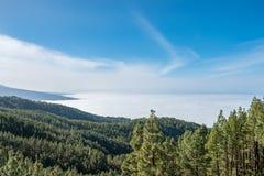 Κωνοφόρο δάσος στο τοπίο βουνών επάνω από τα σύννεφα στοκ φωτογραφία με δικαίωμα ελεύθερης χρήσης