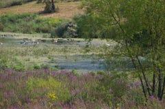 κωνοφόρο δάσος της Ουκρανίας μονοπατιών της ανατολικής Ευρώπης δασικό στοκ φωτογραφία με δικαίωμα ελεύθερης χρήσης
