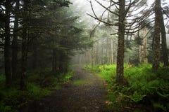 κωνοφόρο δάσος της Ουκρανίας μονοπατιών της ανατολικής Ευρώπης δασικό Στοκ Εικόνα