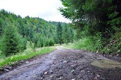 κωνοφόρο δάσος της Ουκρανίας μονοπατιών της ανατολικής Ευρώπης δασικό Στοκ φωτογραφίες με δικαίωμα ελεύθερης χρήσης