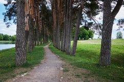 κωνοφόρο δάσος της Ουκρανίας μονοπατιών της ανατολικής Ευρώπης δασικό Αλέα των ψηλών δέντρων Στοκ Εικόνα