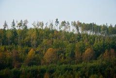 Κωνοφόρο δάσος Στοκ Εικόνες