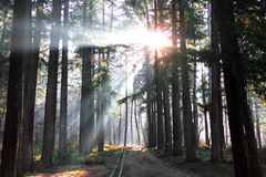 Κωνοφόρο δάσος στοκ φωτογραφία με δικαίωμα ελεύθερης χρήσης