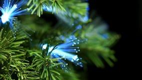 Κωνοφόρο δέντρο με την μπλε ίνα απόθεμα βίντεο