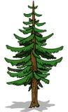 Κωνοφόρο δέντρο απεικόνιση αποθεμάτων