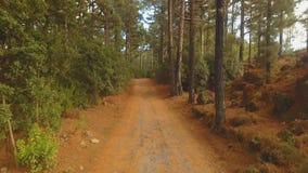 Κωνοφόρο δάσος πεύκων απόθεμα βίντεο