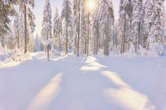 Κωνοφόρο δάσος που φωτίζεται από τον ήλιο στην ομιχλώδη χειμερινή ημέρα Στοκ φωτογραφία με δικαίωμα ελεύθερης χρήσης