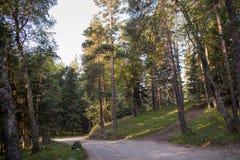 Κωνοφόρο δάσος στην αυγή Στοκ φωτογραφία με δικαίωμα ελεύθερης χρήσης