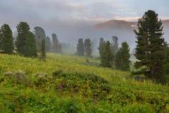 Κωνοφόρο δάσος στην ομίχλη στην κλίση των βουνών Altai Krai στοκ εικόνα