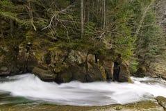 Κωνοφόρο δάσος στις κλίσεις των βουνών, ποταμός βουνών, άνοιξη Στοκ Εικόνα