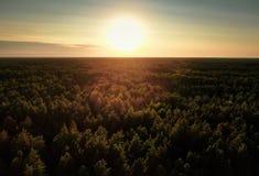Κωνοφόρο δάσος στο ηλιοβασίλεμα ( στοκ φωτογραφίες