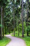 κωνοφόρο δάσος της Ουκρανίας μονοπατιών της ανατολικής Ευρώπης δασικό Στοκ εικόνα με δικαίωμα ελεύθερης χρήσης