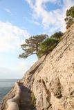 κωνοφόρο δέντρο στοκ εικόνα με δικαίωμα ελεύθερης χρήσης