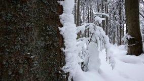 Κωνοφόρο χειμερινό δάσος, εντελώς στο χιόνι Μετακινηθείτε τον πυροβολισμό κίνηση αργή κλείστε επάνω απόθεμα βίντεο