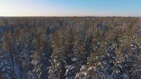 Κωνοφόρο χειμερινό δάσος με τα χιονώδη δέντρα εναέρια όψη απόθεμα βίντεο