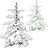 κωνοφόρο χιονώδες δέντρο ελεύθερη απεικόνιση δικαιώματος