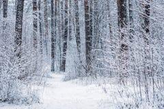 Κωνοφόρο χιονώδες παγωμένο δάσος πεύκων το χειμώνα στοκ φωτογραφίες με δικαίωμα ελεύθερης χρήσης