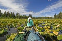 Κωπηλασία μέσω των μαξιλαριών κρίνων στην αγριότητα στοκ εικόνες