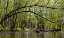 Κωπηλασία σε κανό φίλων μέσω του πυκνού δάσους στοκ φωτογραφίες