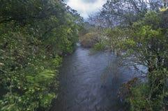 Κόκερ ποταμών Στοκ εικόνα με δικαίωμα ελεύθερης χρήσης