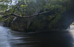 Κόκερ ποταμών στοκ εικόνες