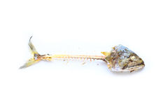 Κόκκαλο ψαριών Στοκ Εικόνες