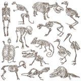 Κόκκαλα και κρανία των διαφορετικών ζώων - freehands ελεύθερη απεικόνιση δικαιώματος