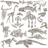 Κόκκαλα και κρανία των διαφορετικών ζώων - freehands απεικόνιση αποθεμάτων