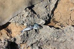 Κόκκαλα ψαριών Στοκ Φωτογραφία