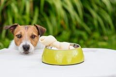 Κόκκαλο σκυλιών στο κύπελλο σκυλακιών με το λυπημένο χαράζοντας πρόσωπο σκυλιών στο υπόβαθρο Στοκ Φωτογραφία