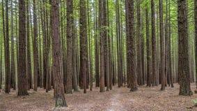 κόκκινα δάση Στοκ εικόνα με δικαίωμα ελεύθερης χρήσης