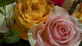 Κόκκινα, άσπρα, κίτρινα τριαντάφυλλα με τις πτώσεις νερού στον ήλιο πρωινού Μυθική ανθοδέσμη των λουλουδιών E φιλμ μικρού μήκους