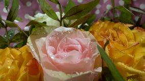 Κόκκινα, άσπρα, κίτρινα τριαντάφυλλα με τις πτώσεις νερού στον ήλιο πρωινού Μυθική ανθοδέσμη των λουλουδιών E απόθεμα βίντεο