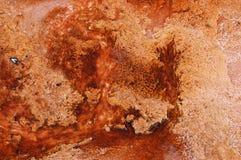 Κόκκινα άλγη Yellowstone Στοκ Εικόνες