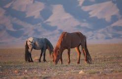 Κόκκινα άλογα από τον ήλιο πρωινού στοκ φωτογραφίες με δικαίωμα ελεύθερης χρήσης