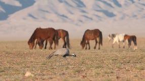 Κόκκινα άλογα από τον ήλιο πρωινού στοκ φωτογραφία με δικαίωμα ελεύθερης χρήσης