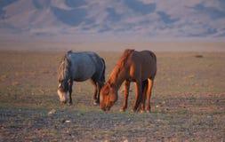 Κόκκινα άλογα από τον ήλιο πρωινού στοκ εικόνα