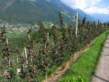 Κόκκινα δέντρα μηλιάς σε ένα υπόβαθρο των βουνών Στοκ εικόνα με δικαίωμα ελεύθερης χρήσης