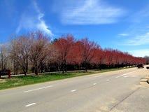 κόκκινα δέντρα Στοκ φωτογραφία με δικαίωμα ελεύθερης χρήσης
