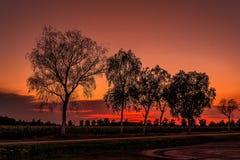 κόκκινα δέντρα Στοκ Εικόνες