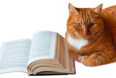 Κόκκινα γάτα και βιβλίο, βιβλίο ανάγνωσης γατών, βιβλίο ανοικτό και δίπλα σε μια κόκκινη γάτα σπιτιών, βιβλίο-u-στροφή Στοκ Εικόνα